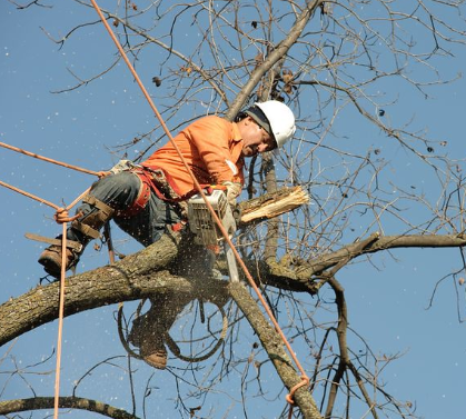 An image of tree removal.